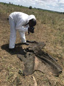 Carcass investigation