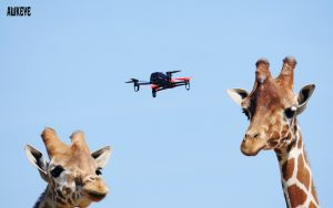 Girafes_and_drones
